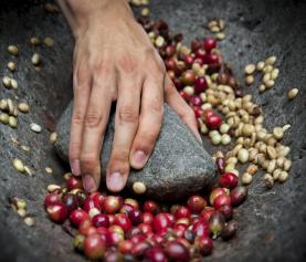 Økologisk dyrket kaffe